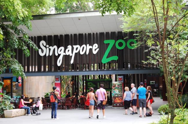 singapore zoo tempat menarik untuk bercuti