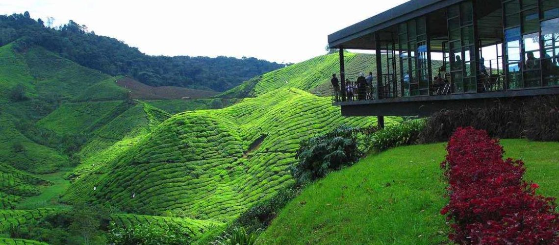 Private_Day_Tour_Cameron_Highlands_from_Ipoh